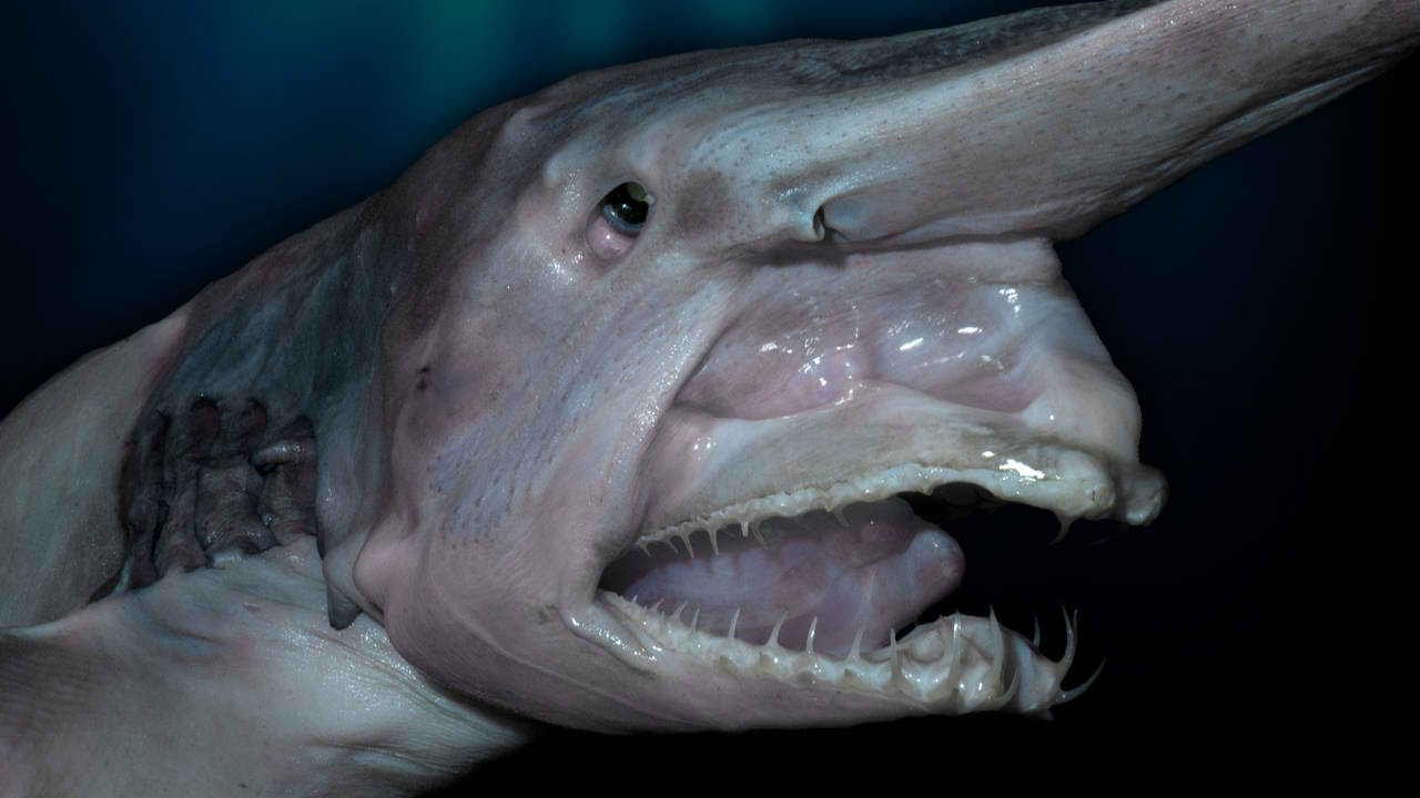 Top 10 creepy deep sea creatures scary ocean monsters for Deep sea fishes